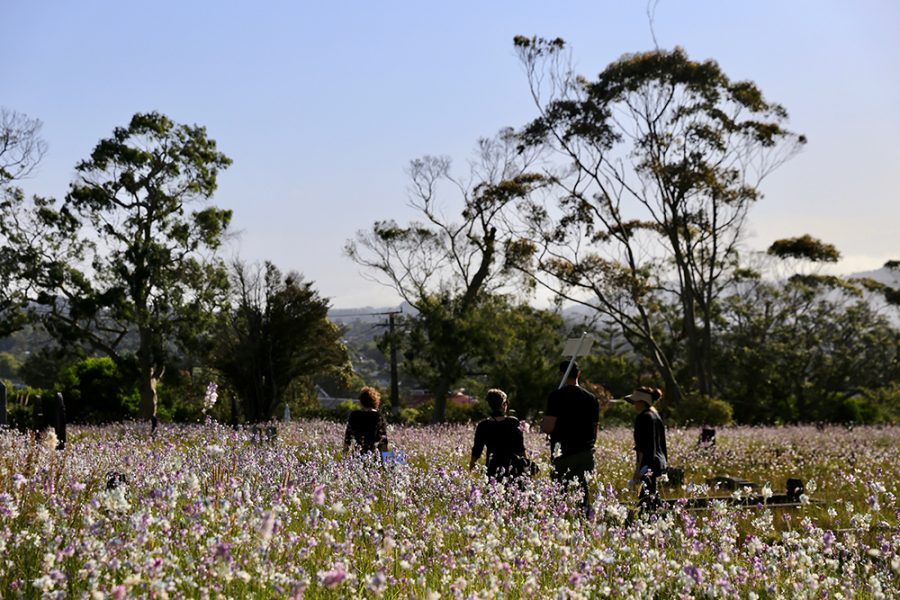 Group crossing wildflower field in cemetery