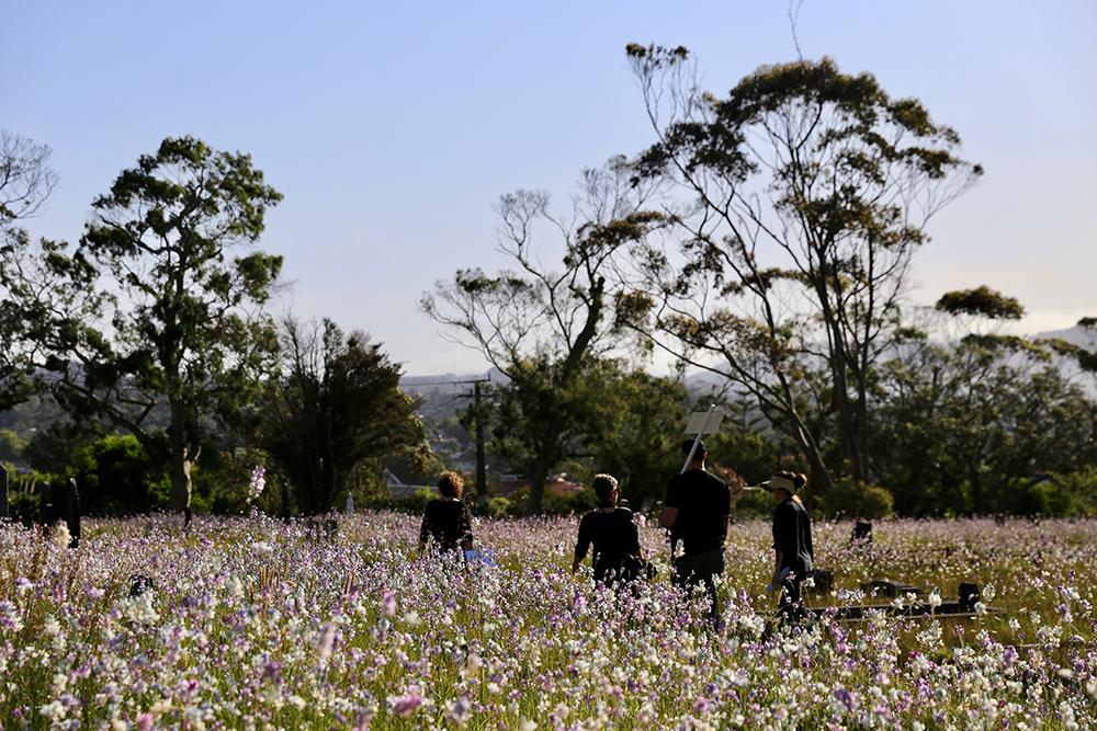 Group crossing wildflower field in cemetery